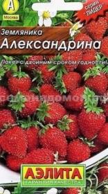 Земляника  Александрина Лидер  (Аэлита)