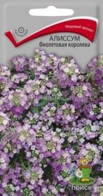 Алиссум Фиолетовая королева (Поиск)