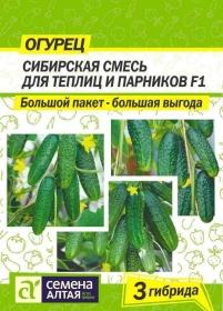 Огурец Сибирская Смесь для Теплиц и Парников (Семена Алтая)