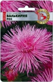 Астра Валькирия селект Роз (Биотехника)