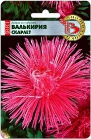 Астра Валькирия селект Скарлет (Биотехника)
