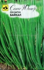 Лук  батун Байкал (Семко)