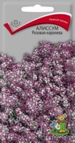 Алиссум Розовая королева  (Поиск)